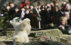 Knut drew millions of visitors to Berlin Zoo and made international headlines